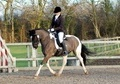 All Rounder horse - 10 yrs 10 mths 14.2 hh Piebald - South Yorkshire