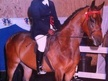 Showing horse - 5 yrs 15.1 hh Bay - Lancashire