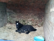 friendly Foal for sale