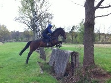 All Rounder horse - 9 yrs 16.2 hh Bay - Berkshire
