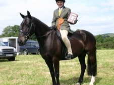 14. 2 Pony For Sale