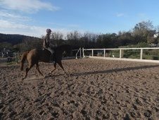 All Rounder horse - 15 yrs 16.2 hh Chestnut - Cumbria