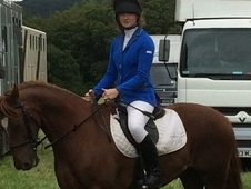 14. 2 flashy chestnut gelding