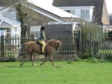 Pony Club Ponies horse - 5 yrs 11 mths 13.1 hh Palomino - Bucking...