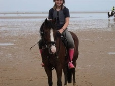 All Rounder horse - 13 yrs 12.2 hh Bay - Norfolk