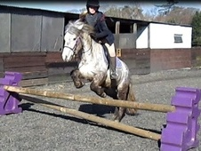 Lead Rein & First Ridden horse - 4 yrs 12.1 hh Grey - West Sussex