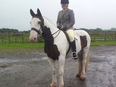 lovely 15. 1 coloured cob for 2/3 day share