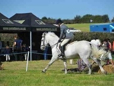 All Rounder horse - 10 yrs 14.2 hh Grey - Nottinghamshire