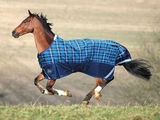 Shires Highlander Lite Turnout Rug (New Design For 2013) - Navy/T...