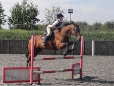 All Rounder horse - 16 yrs 16.2 hh Bay - Oxfordshire