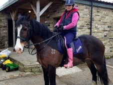 Cobs horse - 16 yrs 15.1 hh Bay - West Yorkshire
