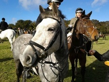 Other horse - 7 yrs 14.2 hh Grey - Hampshire
