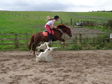 6 Year Old Welsh A Mare For Sale