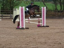 Talented 12. 2 Irish show jumping mare