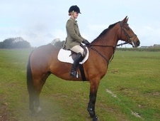All Rounder horse - 8 yrs 16.2 hh Bay - Staffordshire