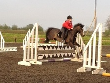 All Rounder horse - 9 yrs 12.2 hh Dark Bay - County Durham