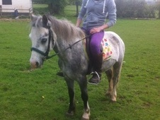 Lead Rein & First Ridden horse - 5 yrs 11 mths 11.3 hh Dapple Gre...