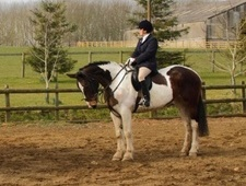 All Rounder horse - 7 yrs 5 mths 16.2 hh Skewbald - Worcestershire
