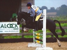 Pony Club Ponies horse - 17 yrs 13.0 hh Dark Bay - Staffordshire