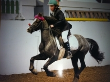 Beautiful Talented Welsh Mare