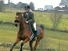 Other horse - 9 yrs 16.3 hh Bay - West Yorkshire