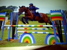 All Rounder horse - 16 yrs 14.2 hh Bright Bay - Clwyd