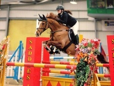 16. 2 Kwpn Competition/broodmare