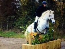All Rounder horse - 7 yrs 15. 1 hh - Laois