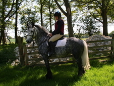 Beautiful mare for riding and driving