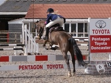 All Rounder horse - 12 yrs 14.1 hh Bay - South Yorkshire
