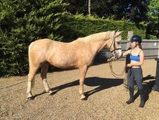 15. 3hh 8yrs Classy Allrounder/ bs/ be