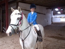 All Rounder horse - 19 yrs 12.2 hh Grey - Clwyd