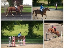 BRILLIANT 14.2HH FOR SALE