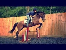 All Rounder horse - 6 yrs 15.0 hh Bay - Surrey