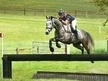 All Rounder horse - 8 yrs 16.2 hh Grey - Northamptonshire