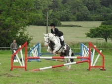 All Rounder horse - 11 yrs 14.2 hh Coloured - West Midlands