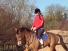 All Rounder horse - 8 yrs 15.3 hh Bay - Nottinghamshire