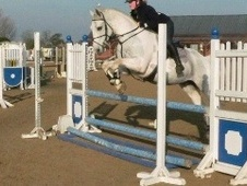 All Rounder horse - 11 yrs 16.1 hh Blue & White - Leicestershire