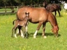 Stunning Filly Sired By Hoys Winner