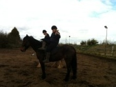 All Rounder horse - 9 yrs 4 mths 15.2 hh Bay - Gloucestershire