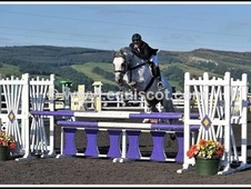 Show Jumpers horse - 10 yrs 2 mths 15.3 hh Grey - Ayrshire