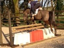 Hunters horse - 6 yrs 15. 2 hh