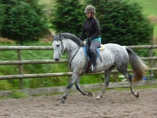 Very Smart 14. 2hh Whp/shp/potential Jumper