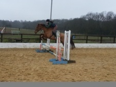 All Rounder horse - 6 yrs 16.3 hh Chestnut - Kent