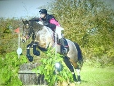 All Rounder horse - 10 yrs 9 mths 15.0 hh Skewbald - Norfolk