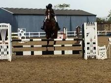 Show Jumper By Unbelievable Darco