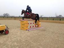 15. 3hh TB Mare For Sale - Allrounder or Broodmare