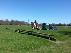 All Rounder horse - 5 yrs 15.2 hh Skewbald - West Sussex