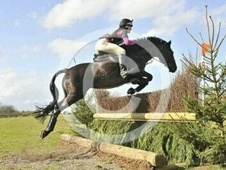 Eventers horse - 15 yrs 15.1 hh Black - North Yorkshire
