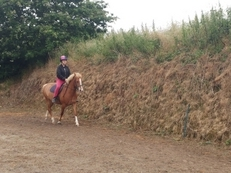 Maisy 13hh chestnut mare 6 year old